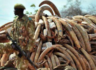 """تمويل بوكو حرام من """"أنياب"""" الأفيال !!"""